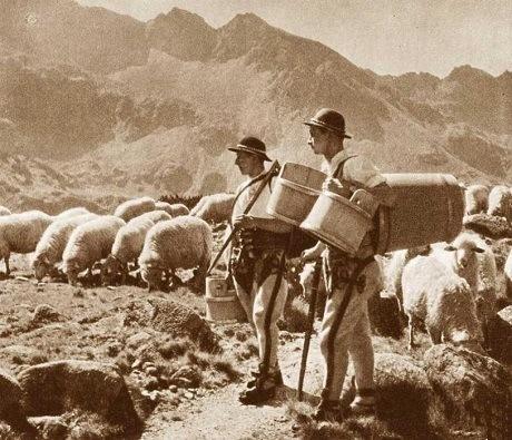 Slowaakse schapenkaas