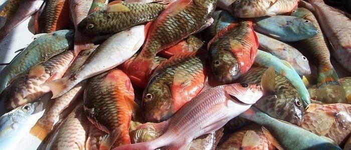 Brodet - stoofpot van vis