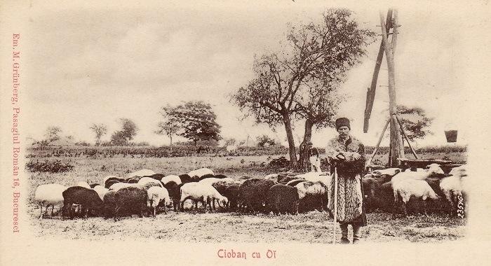 Herderstasje